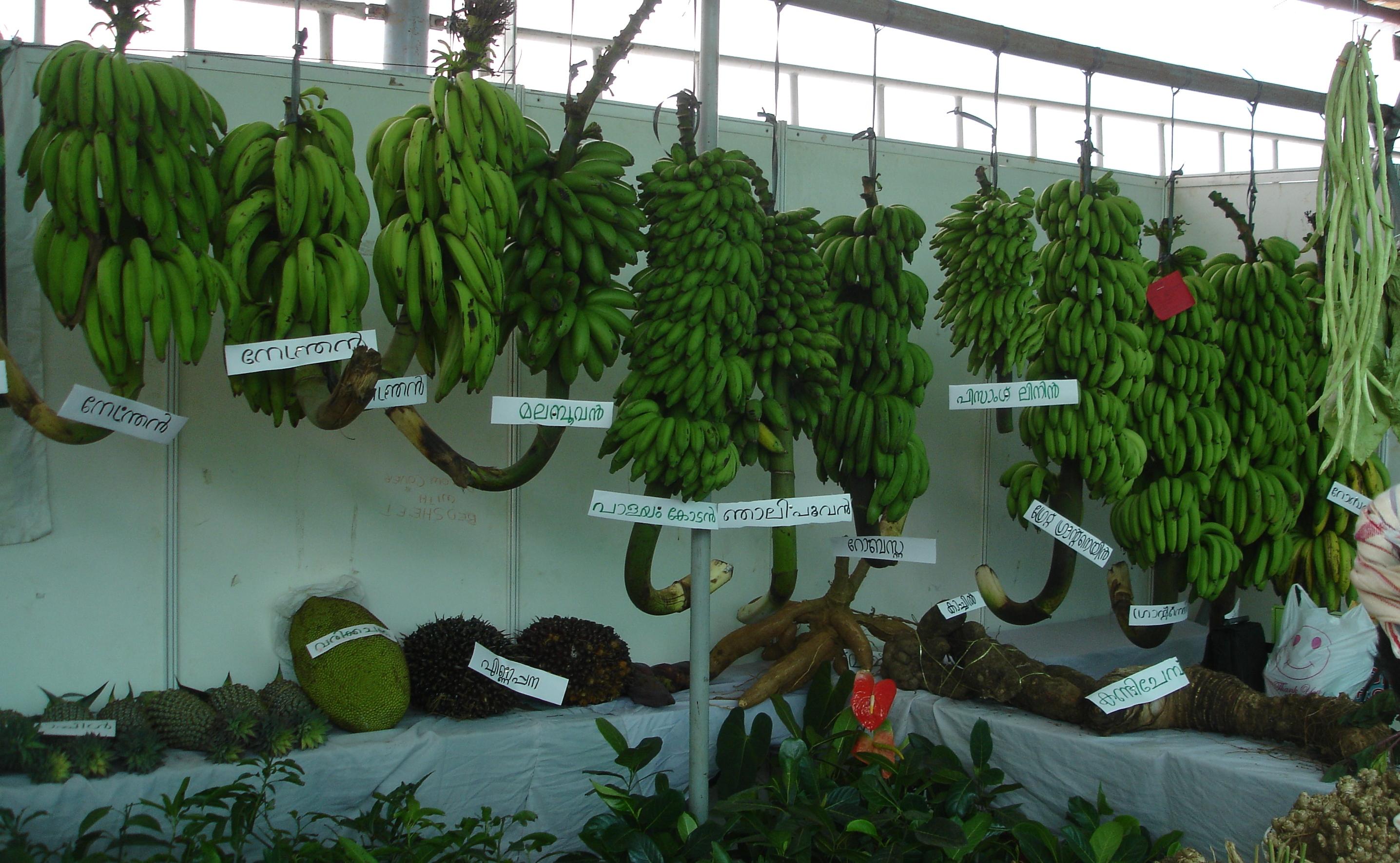 Bananas La Paz Group