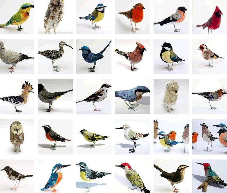 All Types Of Birds Pictures to Pin on Pinterest  PinsDaddy