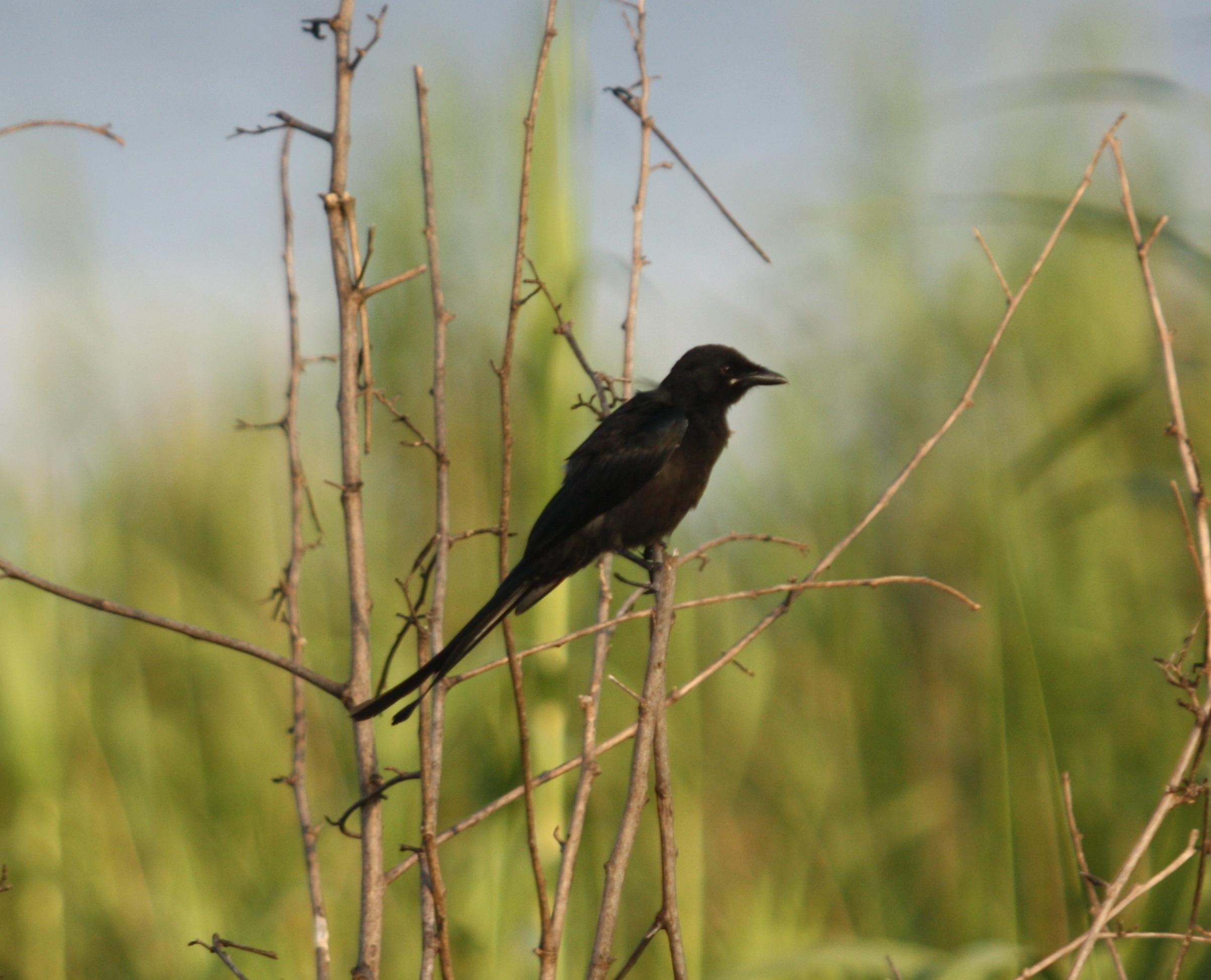 Yellow Bird Name Yellow Bird Names Img