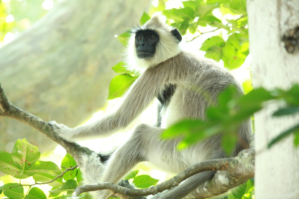 Chinnar Wildlife Sanctuary | La Paz Group