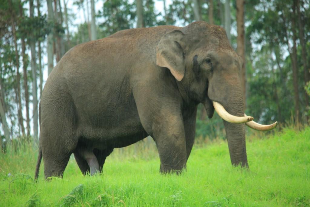Wild Periyar – Elephants | La Paz Group