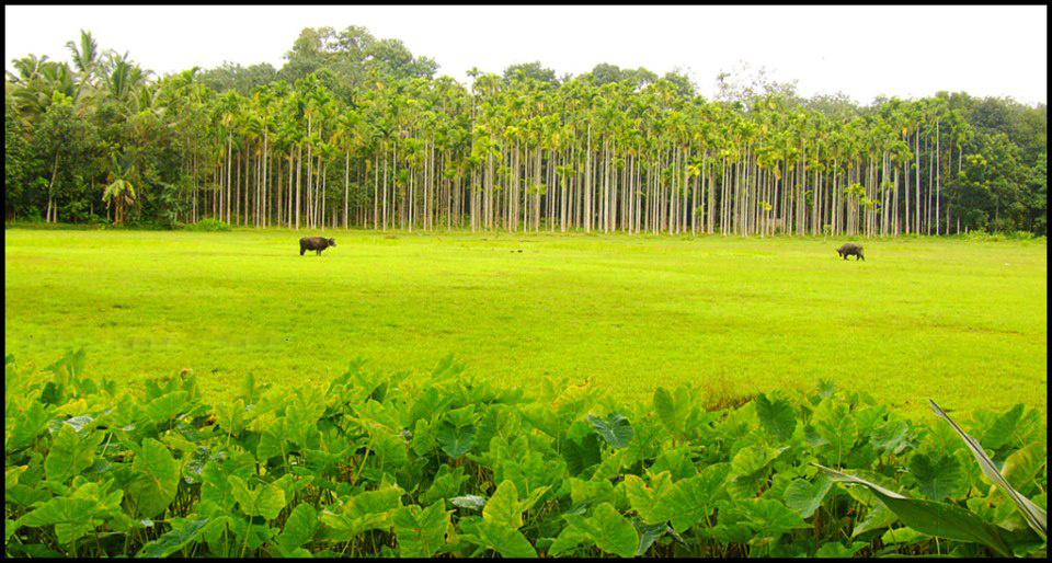kerala agriculture The official website for department of economics & statistics- government of kerala controlled by economics & statistics.