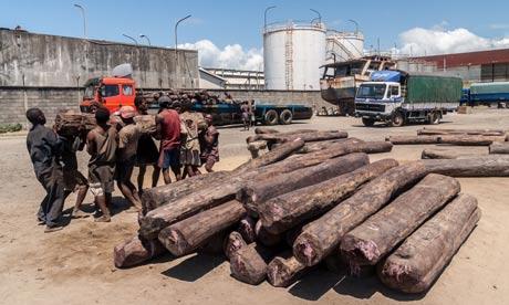 Loading rosewood timber on trucks at the port of Toamasina (Tamatave), Madagascar. Photograph: Babelon Pierre-Yves/Alamy