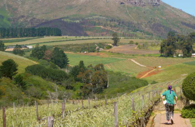 Barbara following a footpath in the wine country of Stellenbosch, South Africa - during one of her many adventures