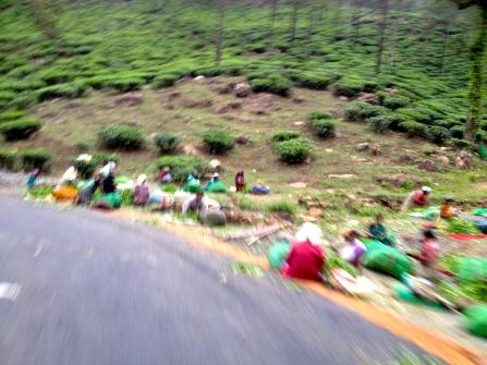 Tea collectors credit Ea Marzarte