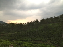 Sunset over the tea plantations credit Ea Marzarte