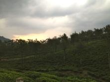 Sunset over the tea plantations credit Ea Marzarte