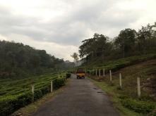 Tuk-tuk crossing plantations credit Ea Marzarte