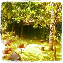 Herbal garden at Ayura wellness center at Cardamom County credit Ea Marzarte