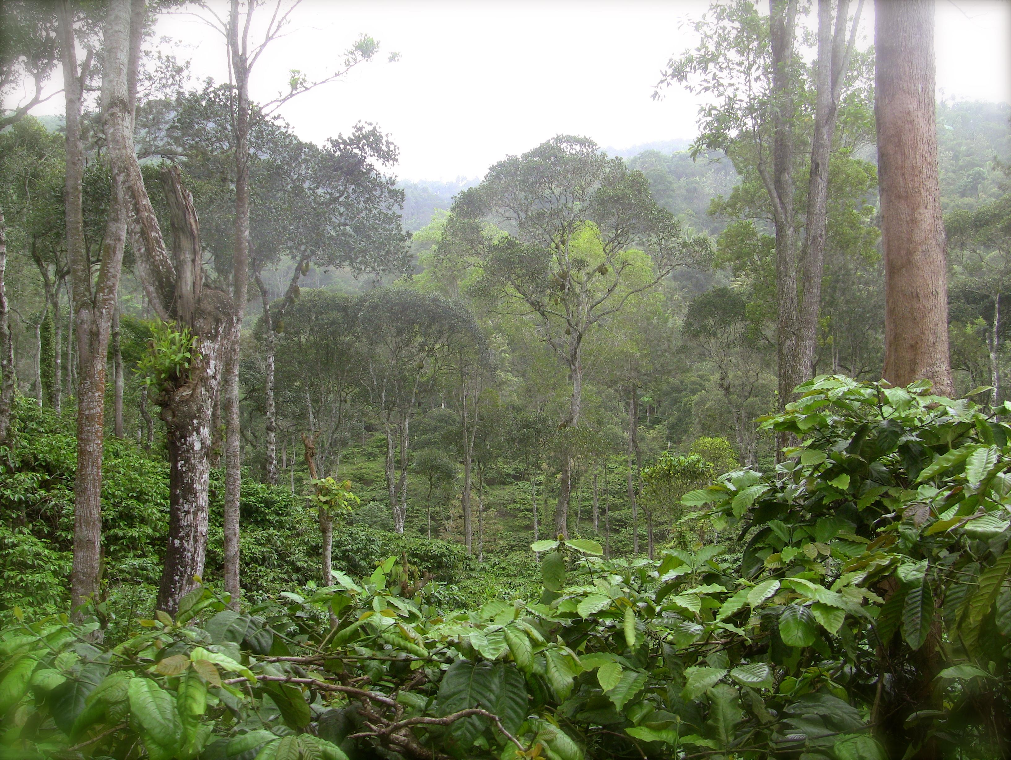 Robusta, Liberian, Arabica: a visit to a coffee plantation ...
