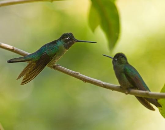 Magnificent Hummingbirds by Brian Magnier - La Paz Group