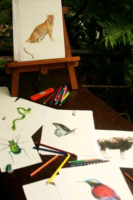 drawing wildlife -viakerala