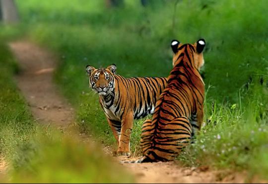 Photo credit: Sudhir Shivaram