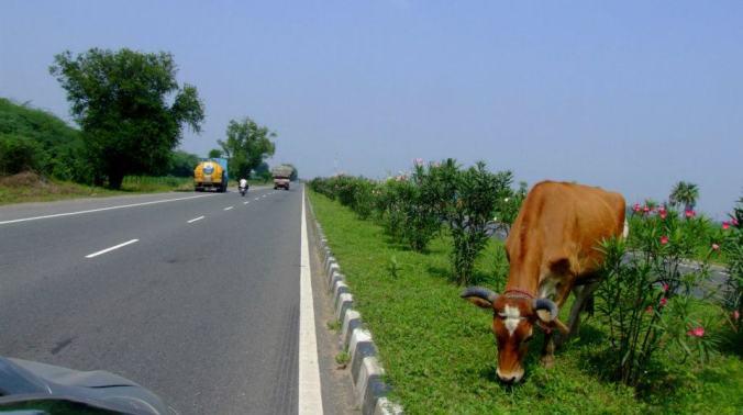 Photo Credit: Ramesh Kidangoor; Trichy-Chennai Hwy