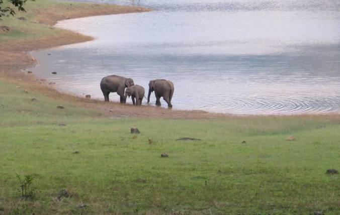 elephants near the lake