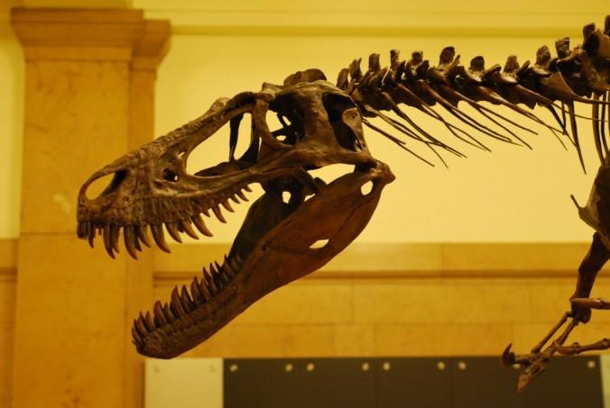 young-tyrannosaur-990x664