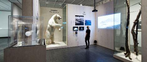 bjørnebeskæring