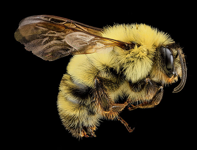 Macro photograph of bee #10