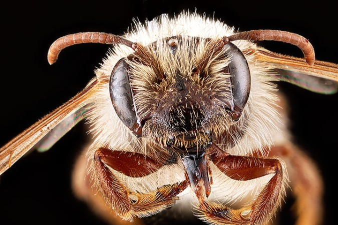 Macro photograph of bee #11