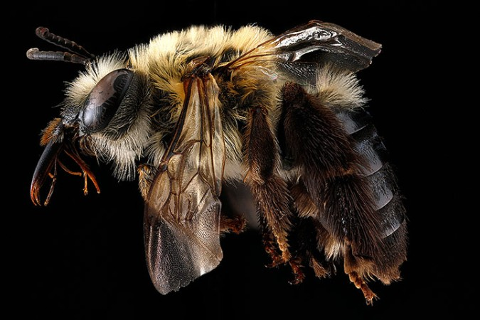 Macro photograph of bee #12