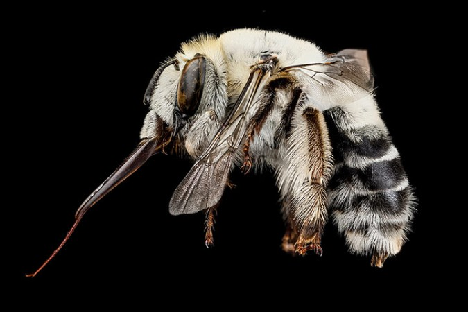 Macro photograph of bee #8