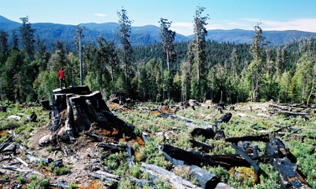 The Wilderness Society says more than 93% of the disputed area is old growth, rainforest or intact natural forest and non-forest. Photograph: AAP