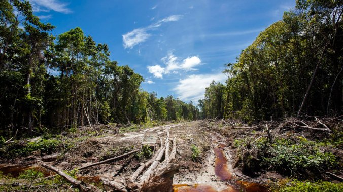 An access road is constructed in a peatland forest being cleared for a palm oil plantation on Indonesia's Sumatra island in 2013. Chaideer. Mahyuddin/AFP/Getty Images