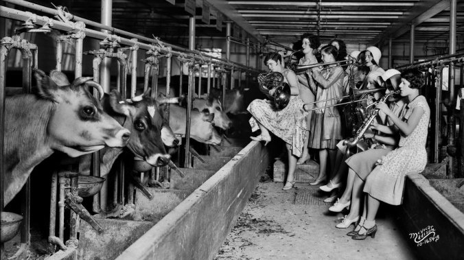 The Ingenues, an all-girl band and vaudeville act, serenade the cows in the University of Wisconsin, Madison's dairy barn in 1930. The show was apparently part of an experiment to see whether the soothing strains of music boosted the cows' milk production. Angus B. McVicar/Wisconsin Historical Society