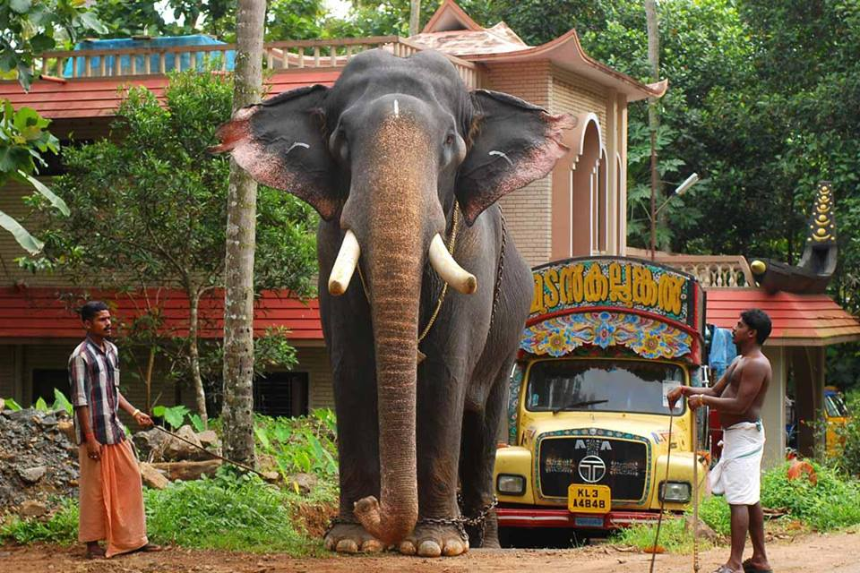 Kerala Elephant Wallpaper Hd Elephant Pageant...