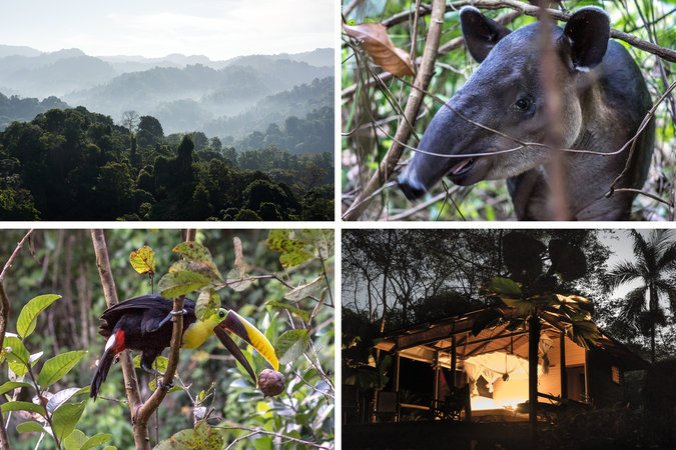 Clockwise from top left: Rain forest in Corcovado National Park; a tapir in the park; a cabin at Bosque del Cabo Rainforest Lodge; spying on a toucan at the lodge. Credit Scott Matthews for The New York Times