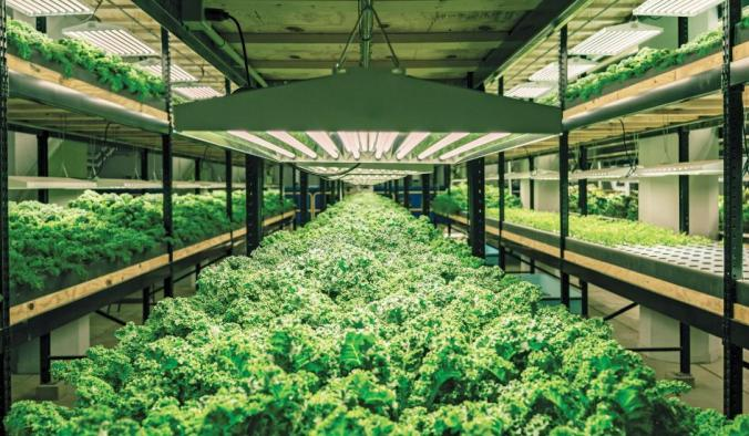 A converted Minnesota brewery now combines hydroponics and fish farming Urban Organics