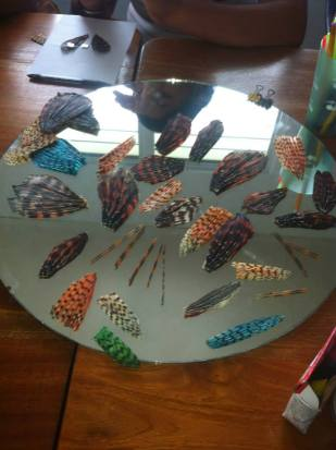 Lionfish spines, fins, and tails ready for jewelry