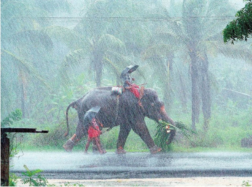 monsoons in india Summer monsoons bring moisture from the sea as the land heats  the summer monsoon of india and the foothills of the himalayas is a creature of the low.