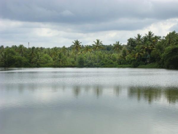 adak-fish-farm-krishnankotta-mala