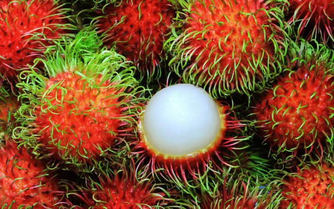 Have you ever seen a rambutan?