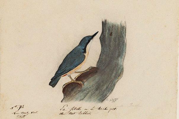 AudubonWoodpecker_605_3