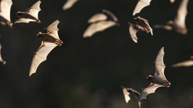 The Bracken Bat Cave outside San Antonio, Texas, is home to millions of bats. Here, a few of them emerge from the colony in 2011.