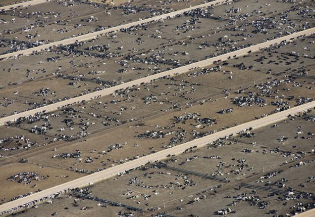 Cattle feedlot, southeastern Colorado. April 2013. 84760. Credit: John Wark