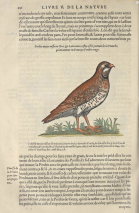 On the first of the twelve days, a partridge in a book of taxonomy.