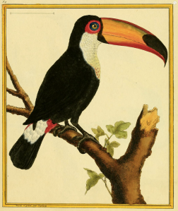 Lords A-Leaping! The 10th Day of Taxonomy includes a toucan and a bitter science rivalry.