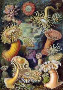On the twelfth Day of Taxonomy My true love sent to me A riotous display of sea anemones!