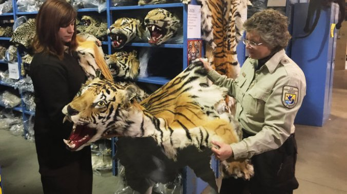 Coleen Schaefer (left) and Doni Sprague display a tiger pelt that was confiscated and is being stored at the National Eagle and Wildlife Repository on the outskirts of Denver. Some 1.5 million items are being held at the facility. The Trans-Pacific Partnership, which is still under negotiation, would punish wildlife trafficking.