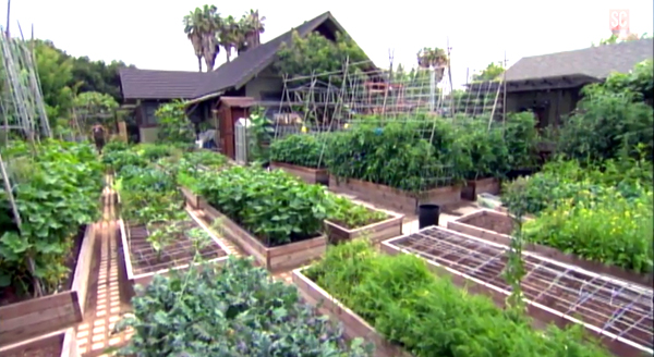 This urban homestead produces 6,000 pounds of food a year.