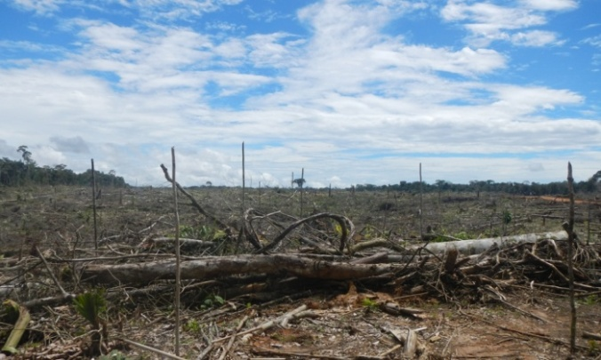 The Tamshiyacu plantation in northern Peru where it is alleged a United Cacao subsidiary illegally cleared primary rainforest. Photograph: Environmental Investigation Agency