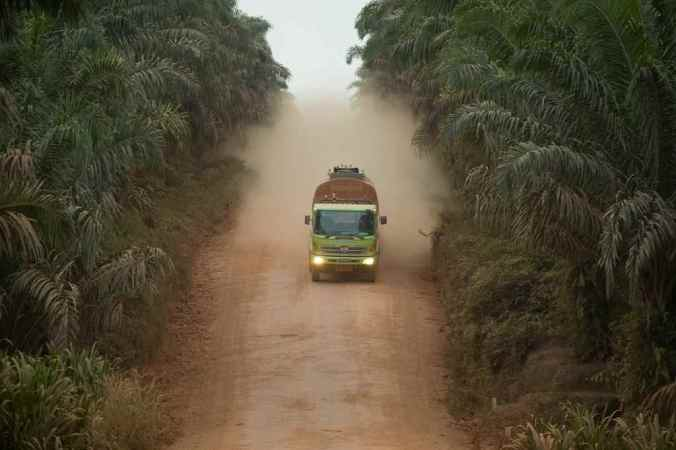 A Cargill-run palm plantation in Borneo in 2009. Image: ​David Gilbert/RAN