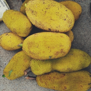 Jackfruit is the largest tree-borne fruit and is found across Asia, Africa, and parts of North and South America