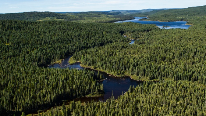 Canada's boreal region covers almost 60 percent of the country's land area, essentially spanning from the Atlantic to the Pacific. It is one of the largest and most complex ecosystems on the planet. PHOTO: borealfacts.com