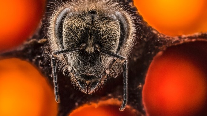 Must-watch: A stunning time-lapse video of the first 21 days of a bee's life by photographer Anand Varma
