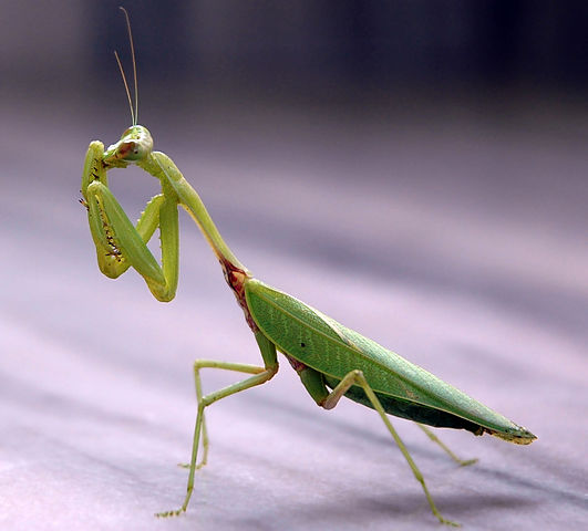 Are insects conscious beings, asks a new study. PHOTO: Wikimedia Commons