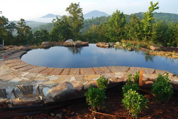A natural pool set up by Total Habitat
